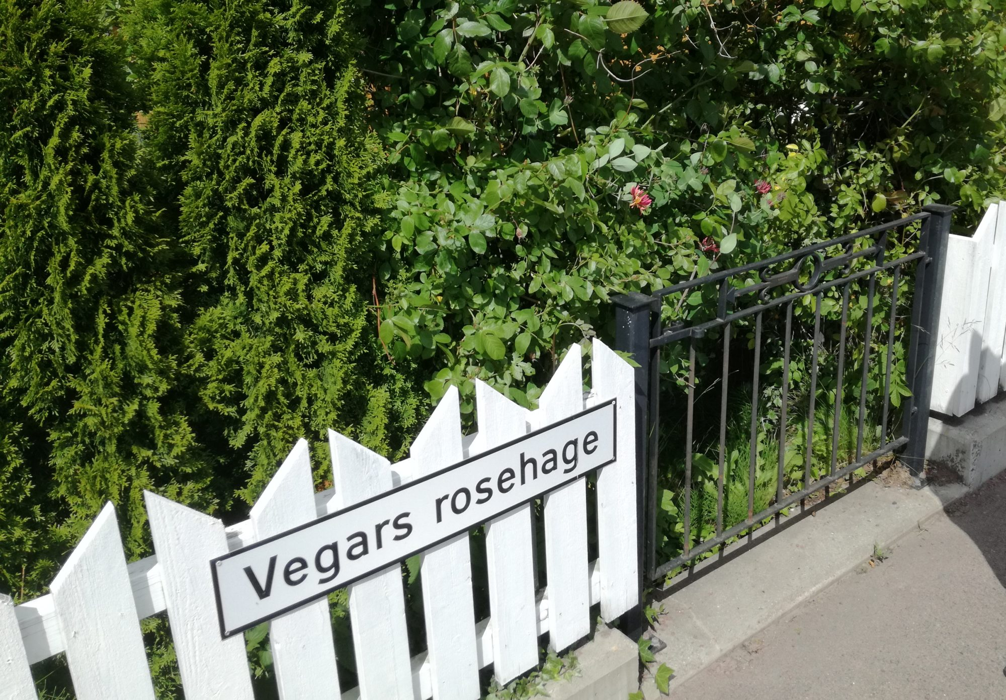 Vegars rosehage